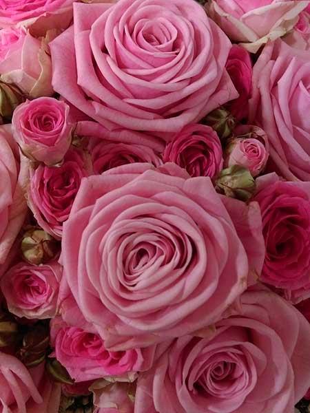 Bar à fleurs Montalieu - Roses