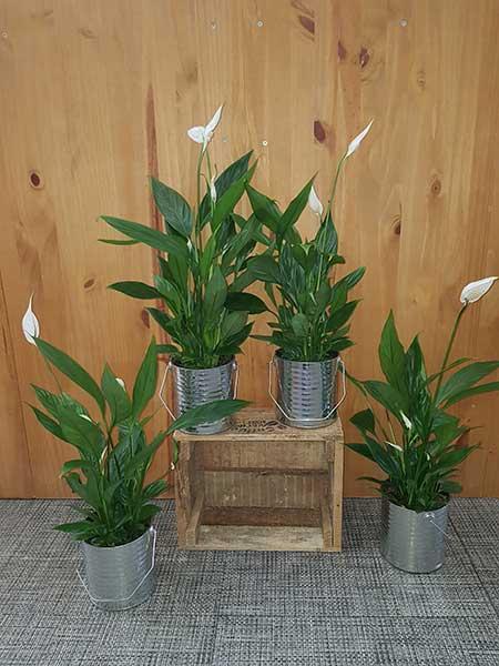 Bar à fleurs Montalieu - Plantes d'intérieur